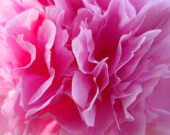 DIY Pink Peony Digital File! DIY Paper Beads! DIY Wall Hangings! Do It Yourself Projects! Peony Blooming Central Oklahoma! Home Decor! Sale!