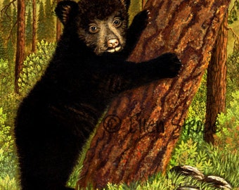 NOTE CARD, Black Bear Cub, Bears, Black Bears, Blank cards, Bear Decor, Outdoors, Wildlife, Ellen Strope