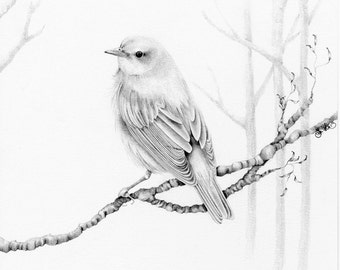 Bird Drawing Giclee Fine Art Print of my Original  Pencil Drawing  Artwork Winter Woodland Bird Pencil Drawing Bird Art Print