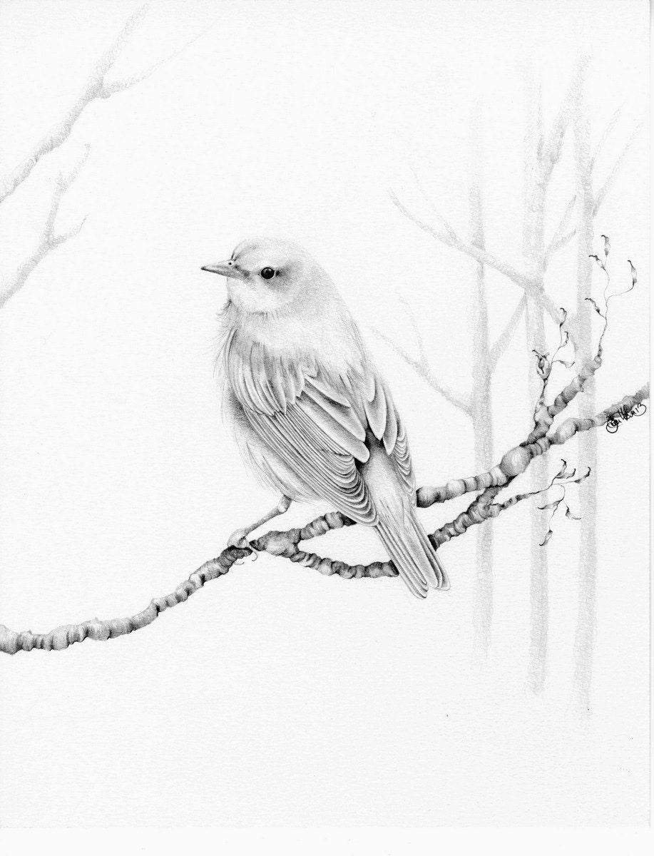 bird drawing giclee fine art print of my original pencil