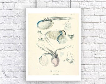 Large Squid Nautilus Blue Educational Chart Nautical Vintage Style Art Print Sepia Beach House Decor Natural History