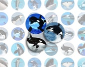 Orcas Printable 1-Inch Circles / Bottlecap Images / Killer Whale Printable Digital Collage / Marine Mammals / Ocean Fish / Instant Download