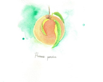 Watercolor Botanical Print: Peach