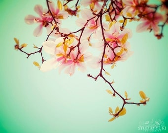 Magnolia Photography, Pink, Spring, Aqua, Large Wall Art, Floral, Flowers, Magnolia Tree, Shabby Chic Home Decor, Nursery Print, Nature