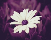 Flower Picture Mauve, Spring Wall Photo, purple print flower, daisy, botanical decor art, bathroom wall decor