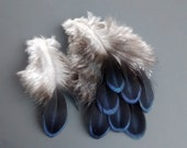 Indigo Pheasant Rump Feathers, Earring, Jewelry, Craft