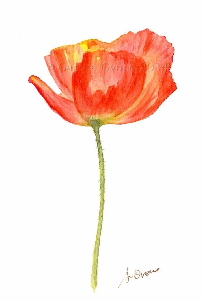 aquarelle coquelicot rouge originale peinture de fleur des. Black Bedroom Furniture Sets. Home Design Ideas