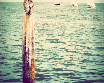 Ocean photograph, Florida photo, landscape photography, nautical art, ocean photography - Pelican's Perch