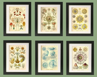 "Art Prints ERNST HAECKEL. Sets of 3, 4, 6, 8 or 9 in 8"" x 10"" Size. Custom Choose Your Set from 42 Prints. Professional Quality Prints"