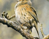 Aceo Bird Print, Dunnock. From an Original Painting by JOHN SILVER. Personally signed. BD001AC
