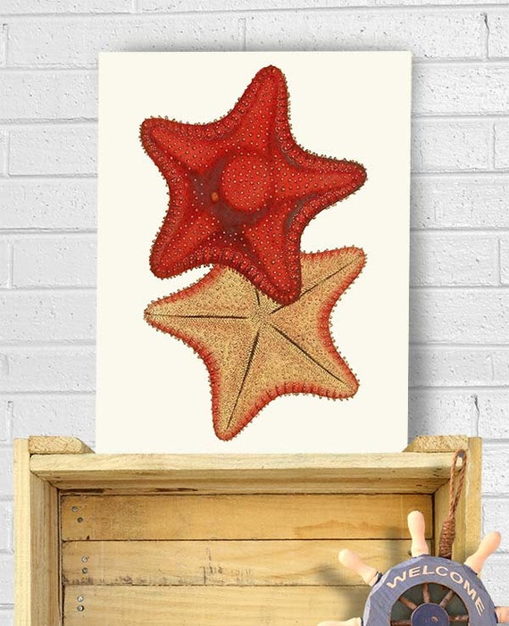 Red Starfish Wall Decor : Starfish red yellow art print nautical sea picture