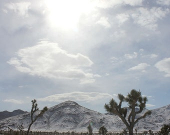 Joshua Tree Art / Desert Snow Field / Desert Art - Nature Photography - Framed Art / Matted Art / Canvas Art