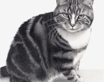Cat drawing - mounted print of original pencil drawing