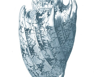 Blue Cone Seashell Wall Art. Blue Seashell Print. Beach Shell Picture. Blue Bathroom Sea shell Print.  Cone Seashell in Amanda Blue