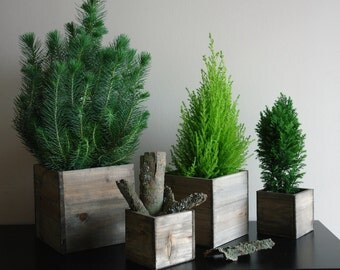 wood vases wood boxes, square wooden boxes centerpieces CHRISTMAS tree planter rustic chic wedding birch bark  wood boxes