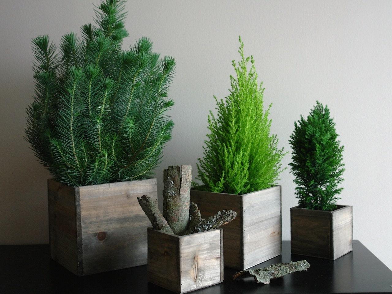 Christmas Tree Planter Box Christmas Tree Planter