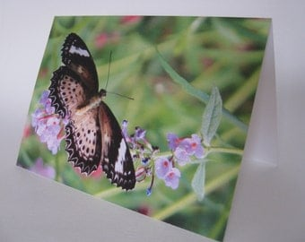 In Flight, art card, butterfly photography, butterfly card, flowers, spring