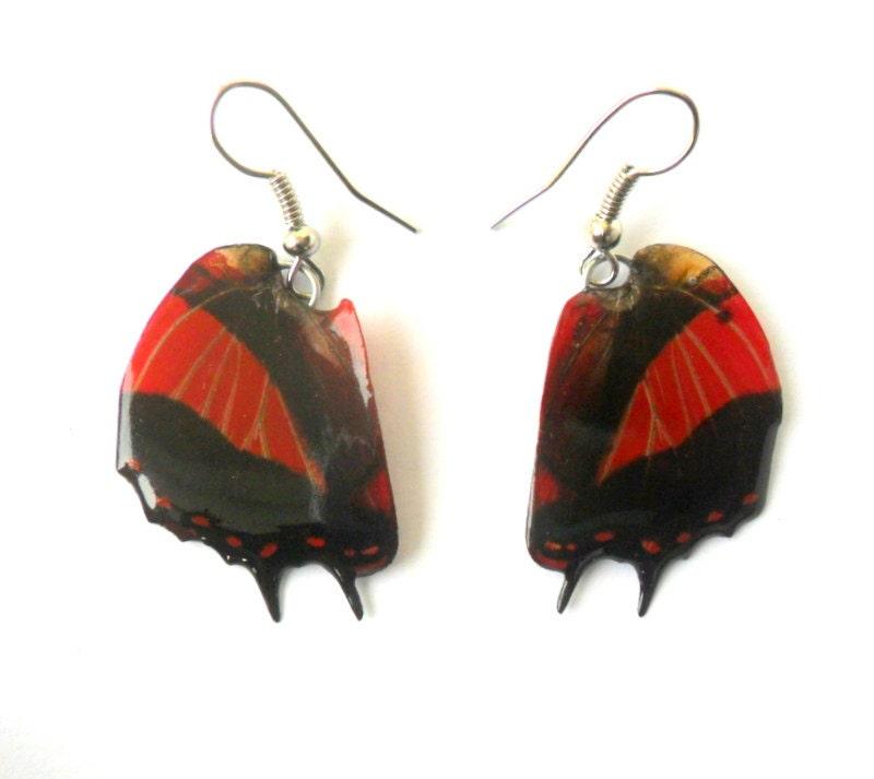 Real Butterfly Wings Earrings Handmade Jewelry by ...