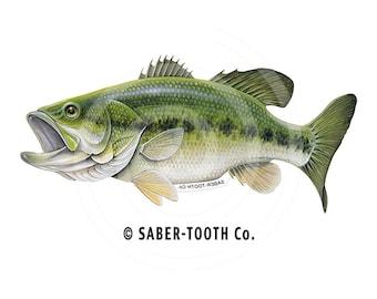 Largemouth Bass Fish Decal Sticker