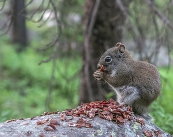 Squirrel Photo Print- Nature Photography, Animal Art Print, Animal Picture, Home Decor, Wall Art