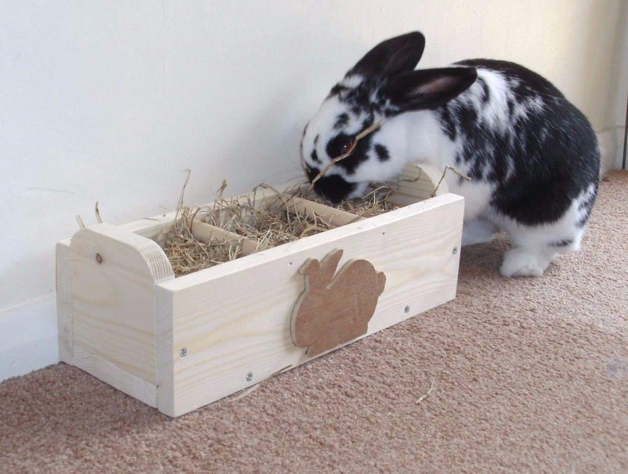 how to teach your rabbit to use a litter tray