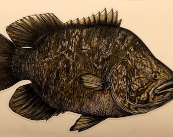 "6"" Tripletail decal sticker"