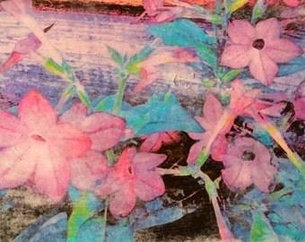 Floral Wall Art, Nicotiana, Lilac, Original photo transfer, Size 10.5 x 6.5