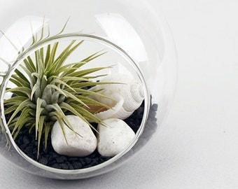"Air Plants Tillandsia Hanging Glass Terrarium Set."" Black Sea "" by Joinflower Joinfolia"