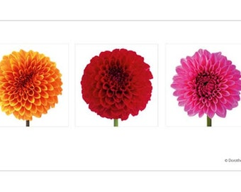 Greeting Card Flower, Dahlia, folded card inclusive envelope
