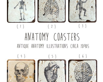 Vintage Anatomy Skeleton Coasters, 4 Piece Set, Tumbled Marble (OR MIX & MATCH)