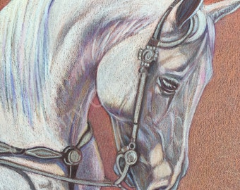 """Equine Art. Original equine colored pencil drawing of an Arabian stallion at a horse show, entitled """"Interlude 2""""."""