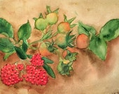 Rosehips and Berries
