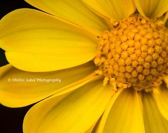 Download Digital Macro Yellow Flower Photography Fine Art Home Decor Wall Art Wall Decor Yellow Art Yellow Download Canvas Print