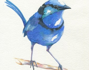 6 watercolour bird greeting cards printed from original artwork, boxed set of six designs, blank inside