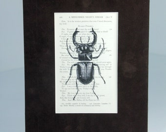 Matted Giclee Print of Horn Bug Illustration on Antique Vintage Upcycled Recycled Book Page. Ready To Frame 8 x 10~ Brown Suede-like Matting