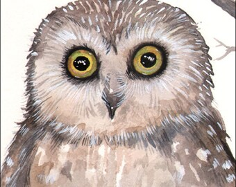 Wide Eyed Owl - Original Watercolor Giclee Print Wildlife Art - Cute Little Owl by Molly Harrison