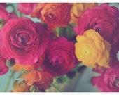 Flower Photography, Still Life, Ranunculus, Fuchsia, Pink, Yellow, Colorful, Vintage Tones, Dreamy, Hazy, Pretty Wall Art, Home Decor, Soft
