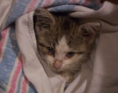 PLEASE HELP ASAP--Sponsor the Spay/Neuter of a Rescue Cat--Free Skin Cream--Animal Rescue