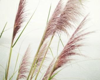 Botanical photography print pale pink pampas sea grass wall art - Sea Grasses