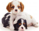 CAVALIER KING CHARLES Dog -Two Color Puppies on one 16 inch square Fabric Panel for Quilting and Sewing