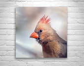 Cardinal Bird Photography, Cute Forest Animal, Nature Photography, Red Cardinal, Bird Art, Wildlife Art, Square Print, Square Art