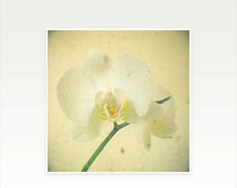 SALE 30% OFF Orchid Photography, Nature Art, Cream and White Decor, Bedroom Art, Romantic Floral - White Orchid