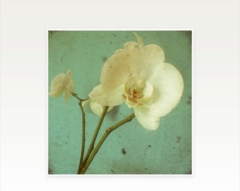 SALE 30% OFF Orchid Photography, Flower Art Print - Morning Glory