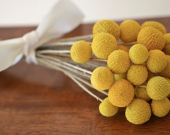 Bunch of Craspedia, Billy Balls, 25-35 stems, Billy Buttons, Yellow Dried decor, modern wedding, wedding decor