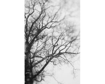 Tree Photography, Woodland Photograph, Wall Decor, Surreal Photo, Nature Picture, Fine Art Print, Rustic, Black and White, Branch Photograph