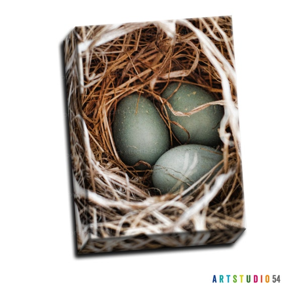 "Blue Teal Tan - Robins Egg Nest - 6""x6"" to 36""x36"" - 1.25 Thin Bar Gallery Wrapped Canvas - artstudio54"