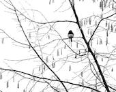 Snowing Again - A Dark eyed Junco Enjoying Snow Winter snow Winter decoration First snow Snow white White snow Snowy Fine Art Print 20x20
