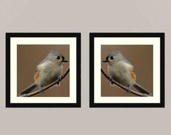 Titmouse set 2 -  gift idea Nature beauty green Feathered friend birder watching Love bird wall decor Birder back yard friends wall Fine Art