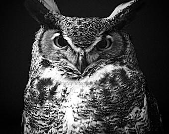 The Great Horned Owl - gift idea Nature beauty Feathered friend birder watching wisdom bird wall decor as wisdom as an owl wall Fine Art