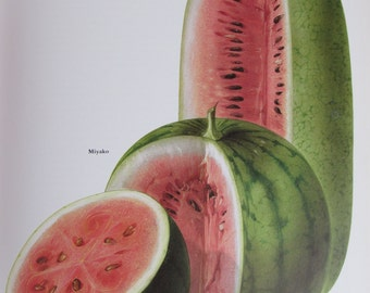 Watermelon, Miyako/Sugar Baby/Charleston Gray, Color Plate, 7.75 x 11.5 in, Vintage Illustration by Marilena Pistoia, Unframed Book Print